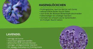 Pflegeleichter Garten: Die besten Tipps für Pflanzen, Möbel & Co