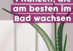 Grüne Oase: Diese 7 Pflanzen wachsen am besten im Bad! #pflanzenbad #pflanzenba...